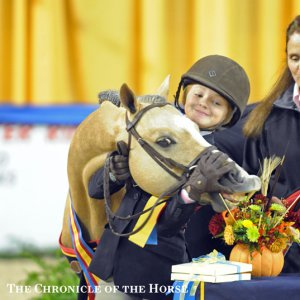 armani chronical of the horse.jpg