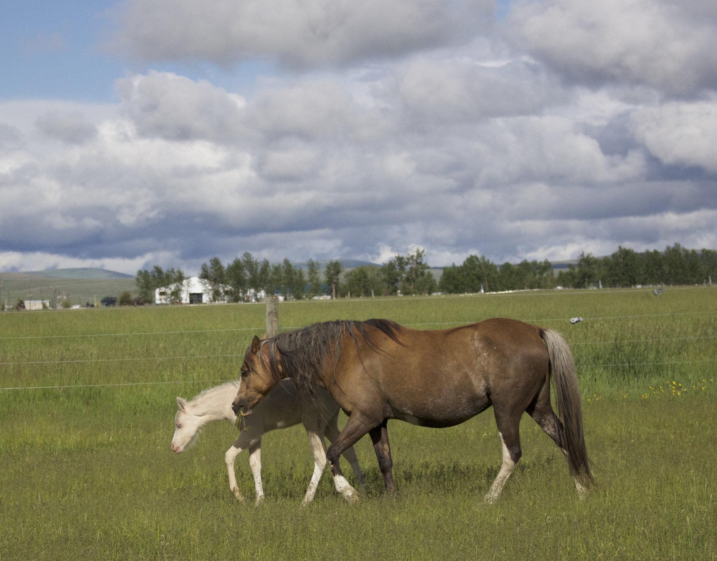 Foal photos June 10 129.jpg