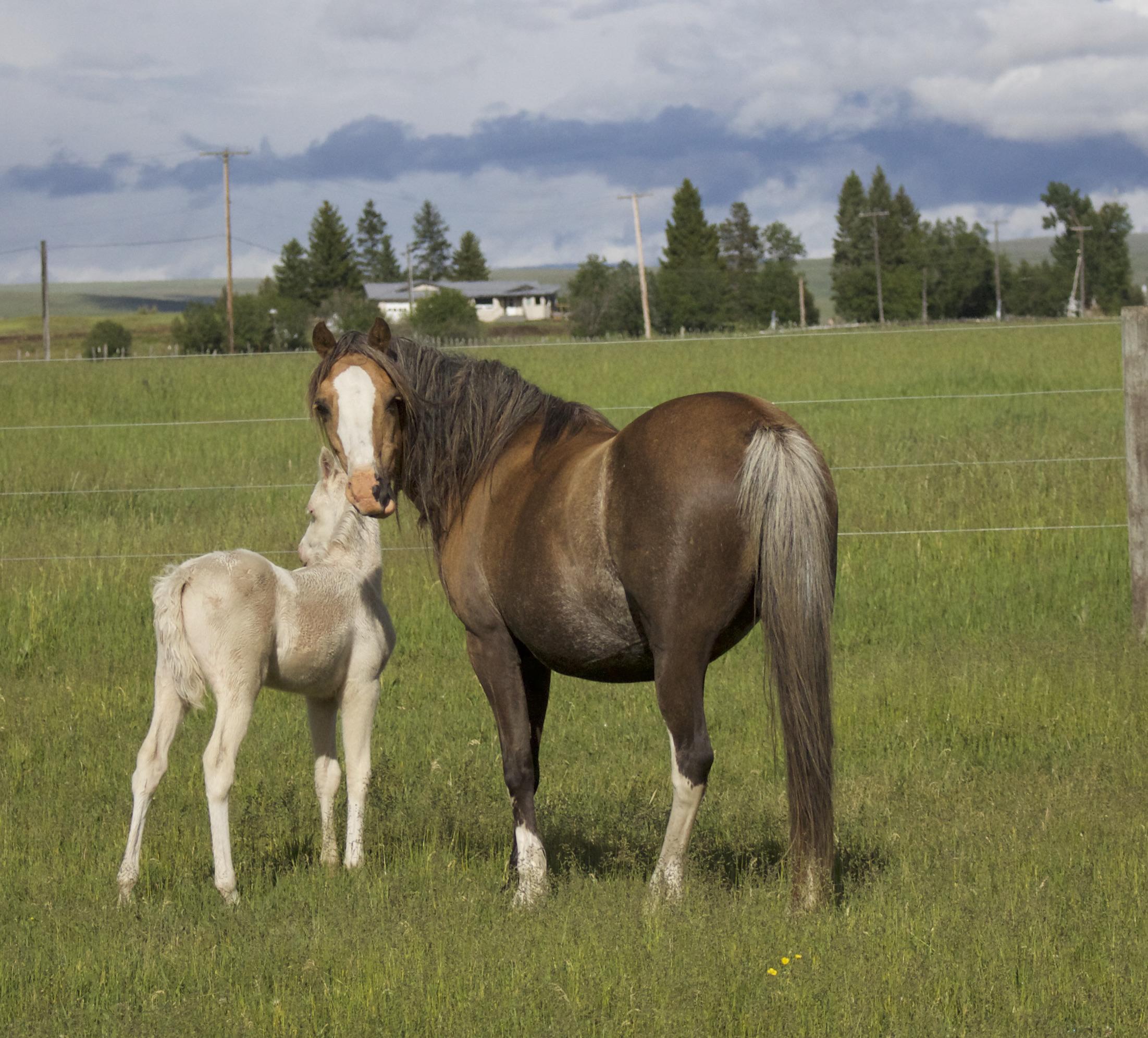 Foal photos June 10 134.jpg