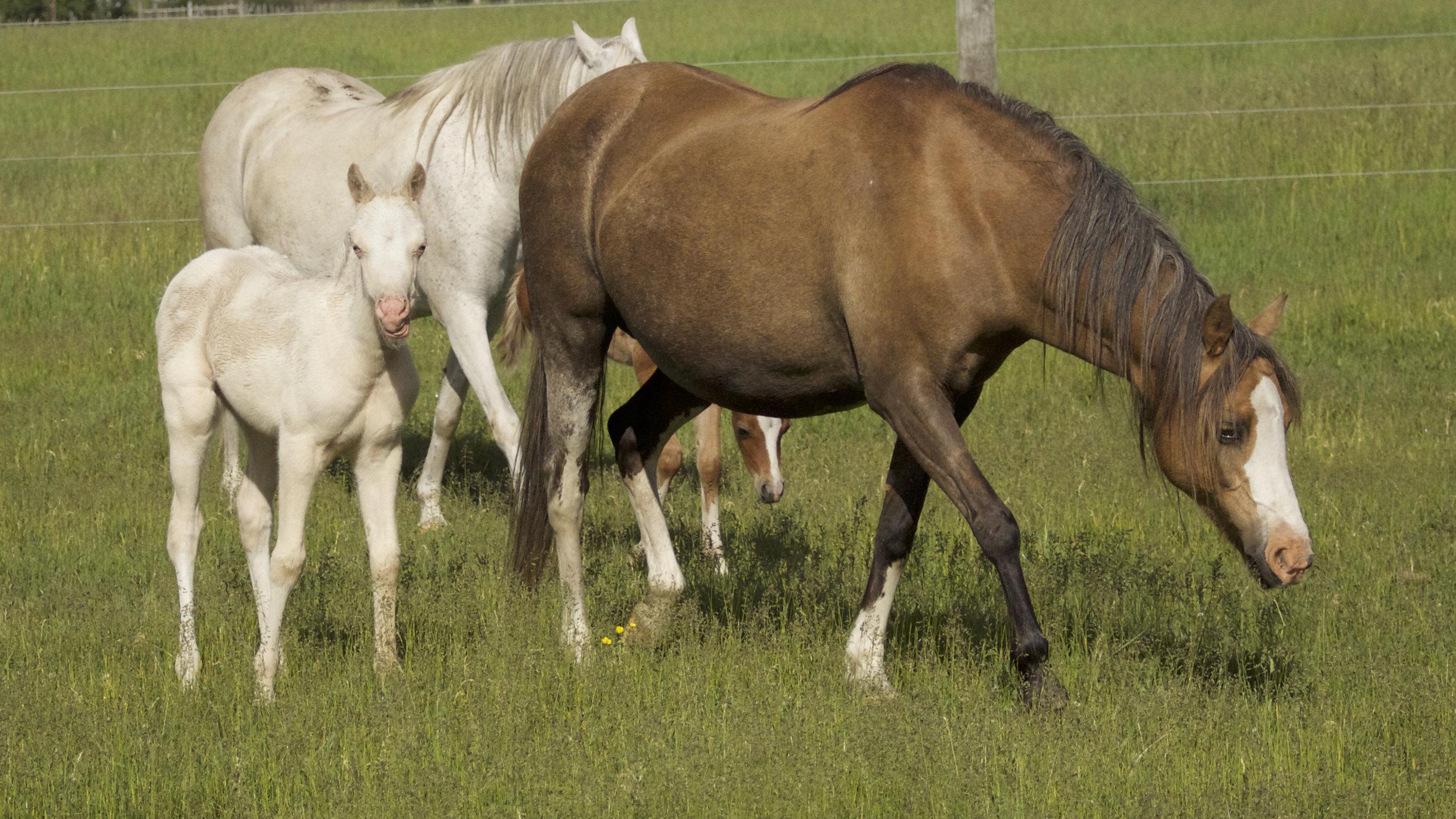 Foal photos June 10 140.jpg