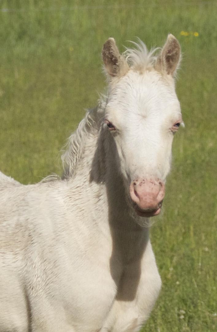 Foal photos June 10 145.jpg