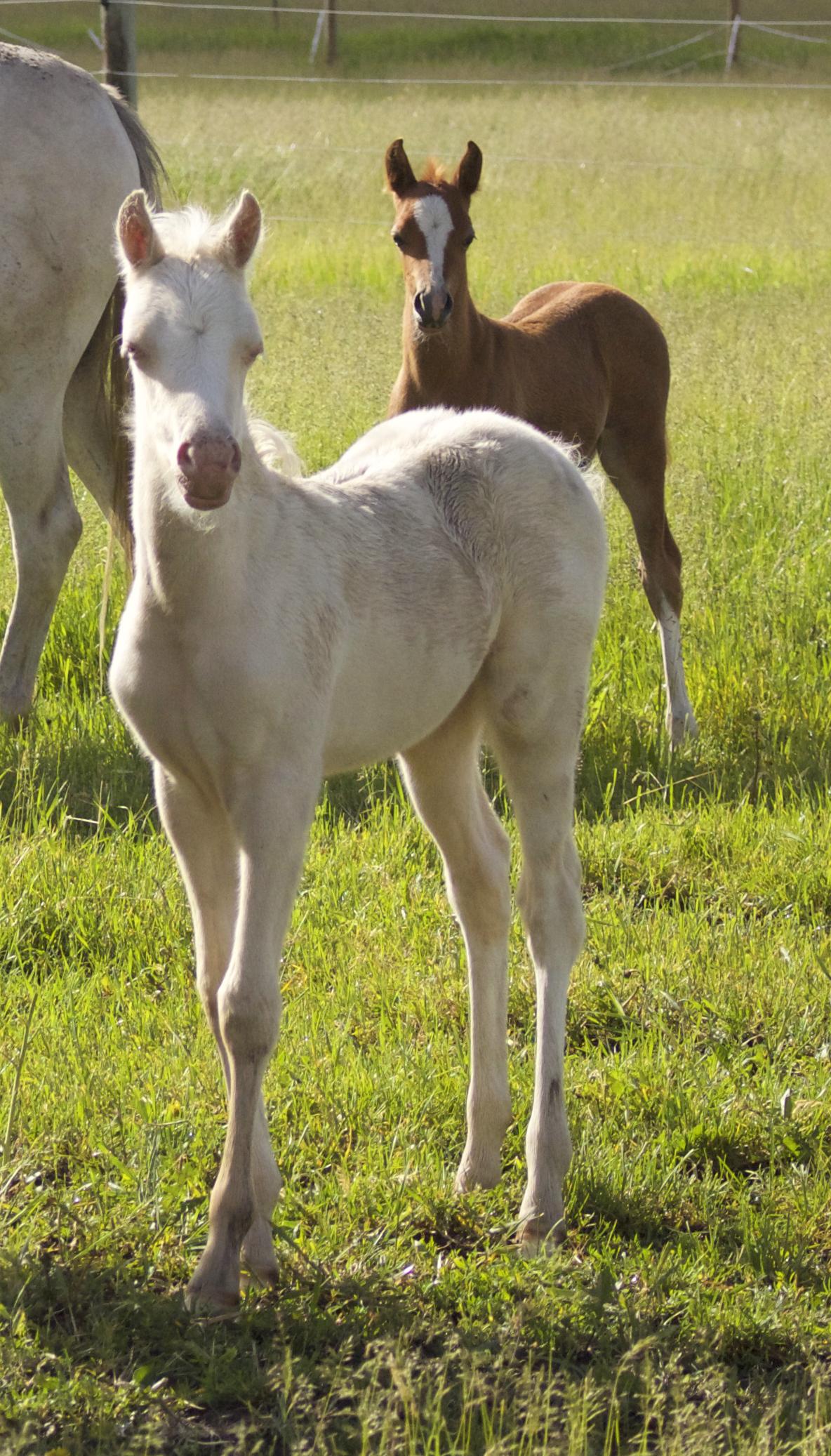 Foal photos June 10 160.jpg
