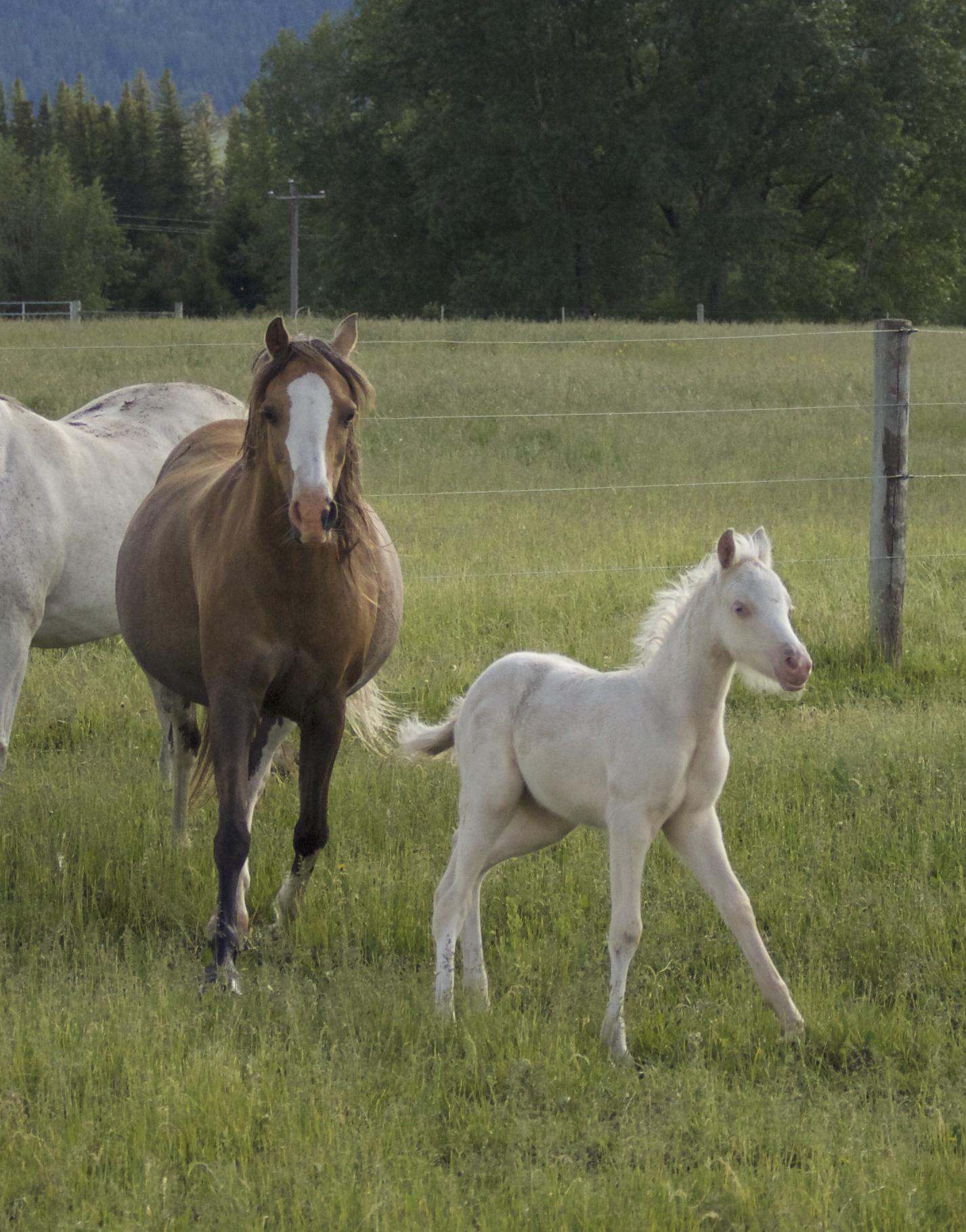 Foal photos June 10 189.jpg