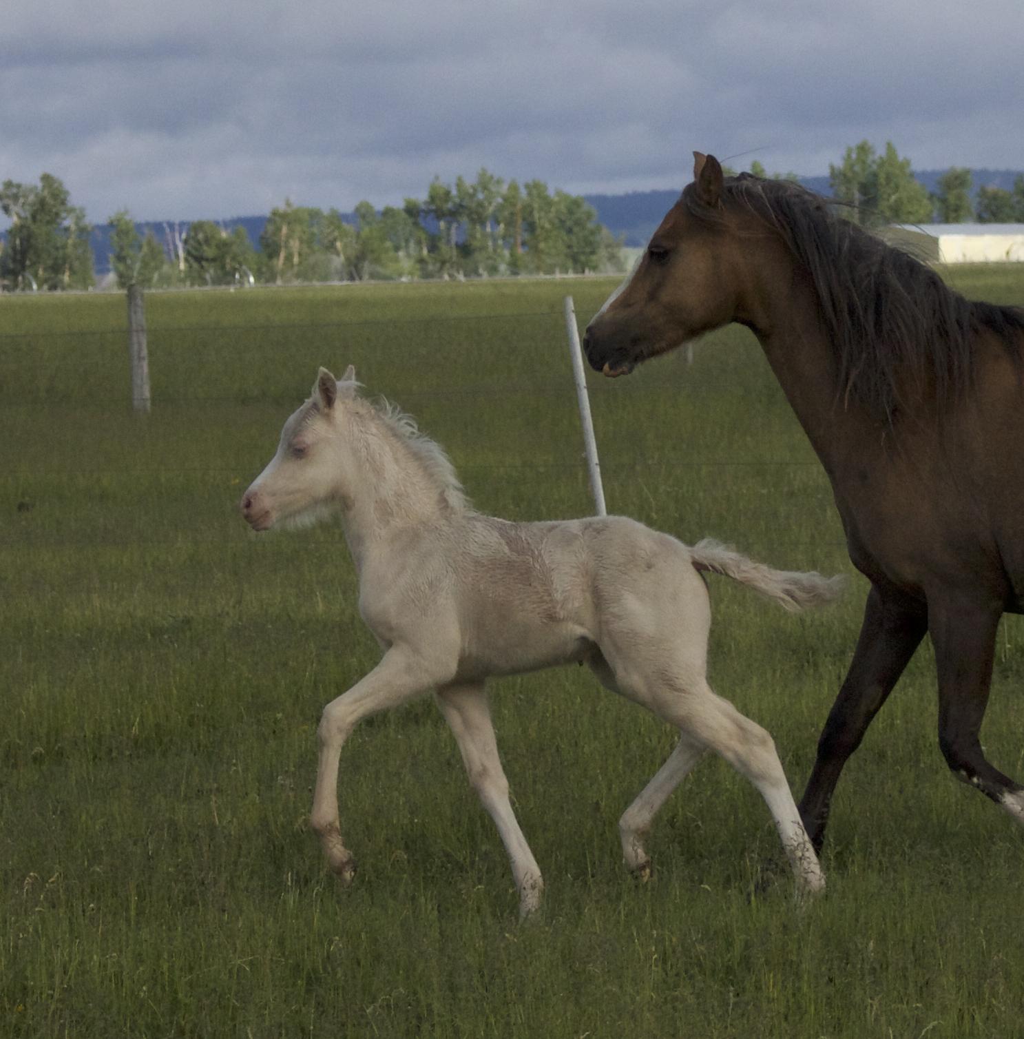 Foal photos June 10 195.jpg