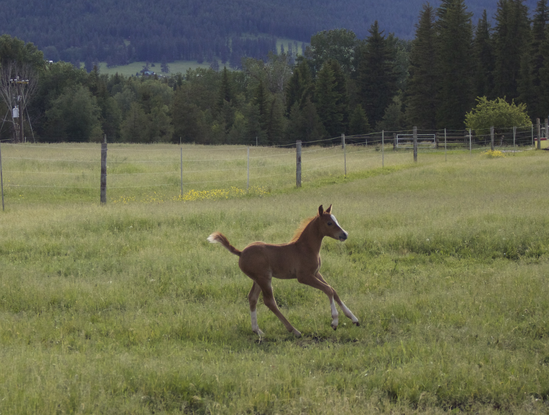 Foal photos June 10 179.jpg