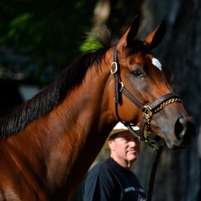 This is Havre de Grace, the morning before she beat the boys in the 2011 Woodward. Today, another great racehorse takes to the track at #Saratoga. Are you watching? Link in profile. #horse #horseracing #horses #americanpharoah #travers #saratogasprings #saratogaracetrack
