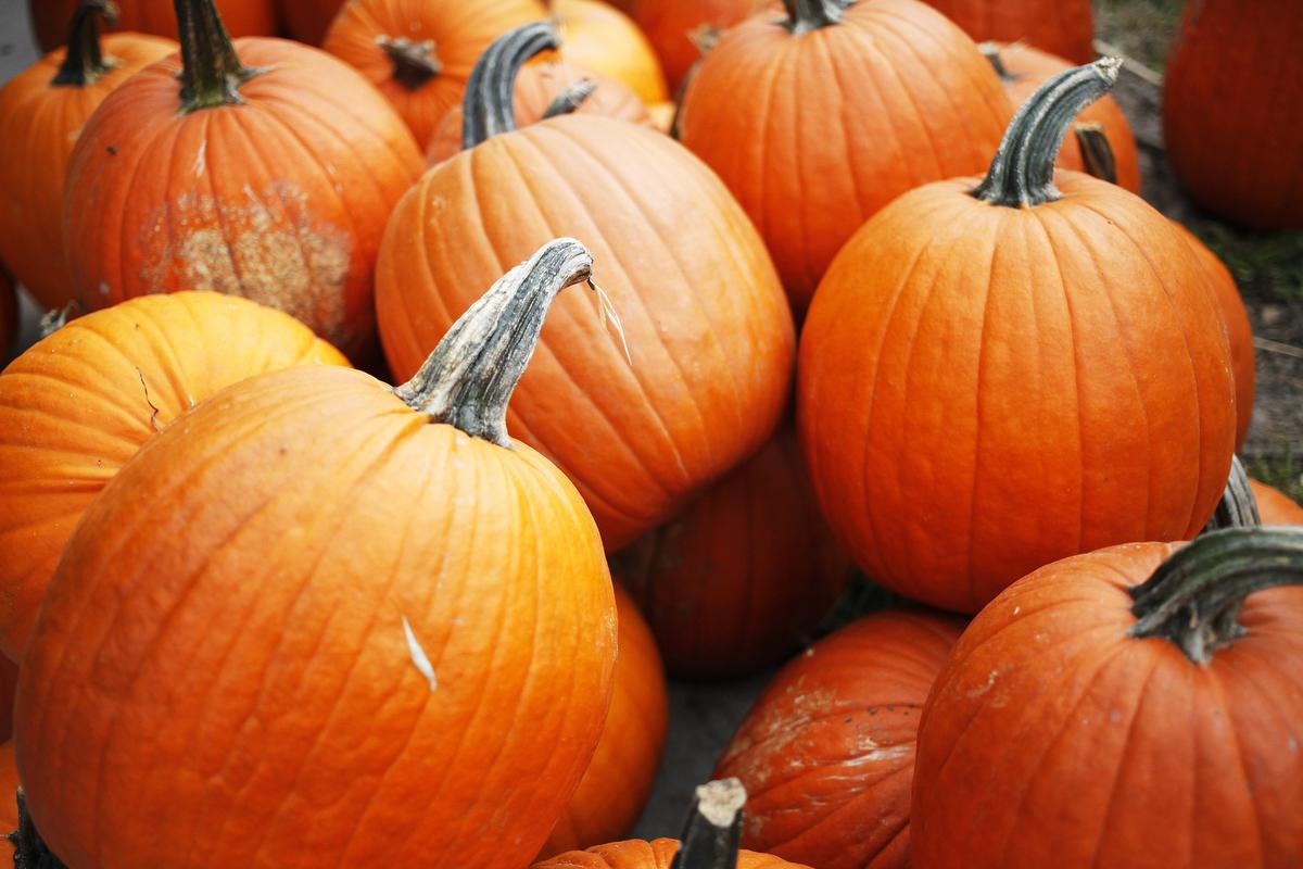 Carolyn's Pumpkin PatchFirst day of fallSeptember 23, 2014