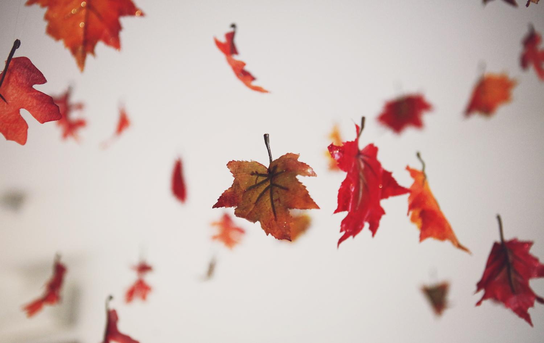 Last-minute decoration ideas: Dangling fall leaves DIY   Freckle & Fair