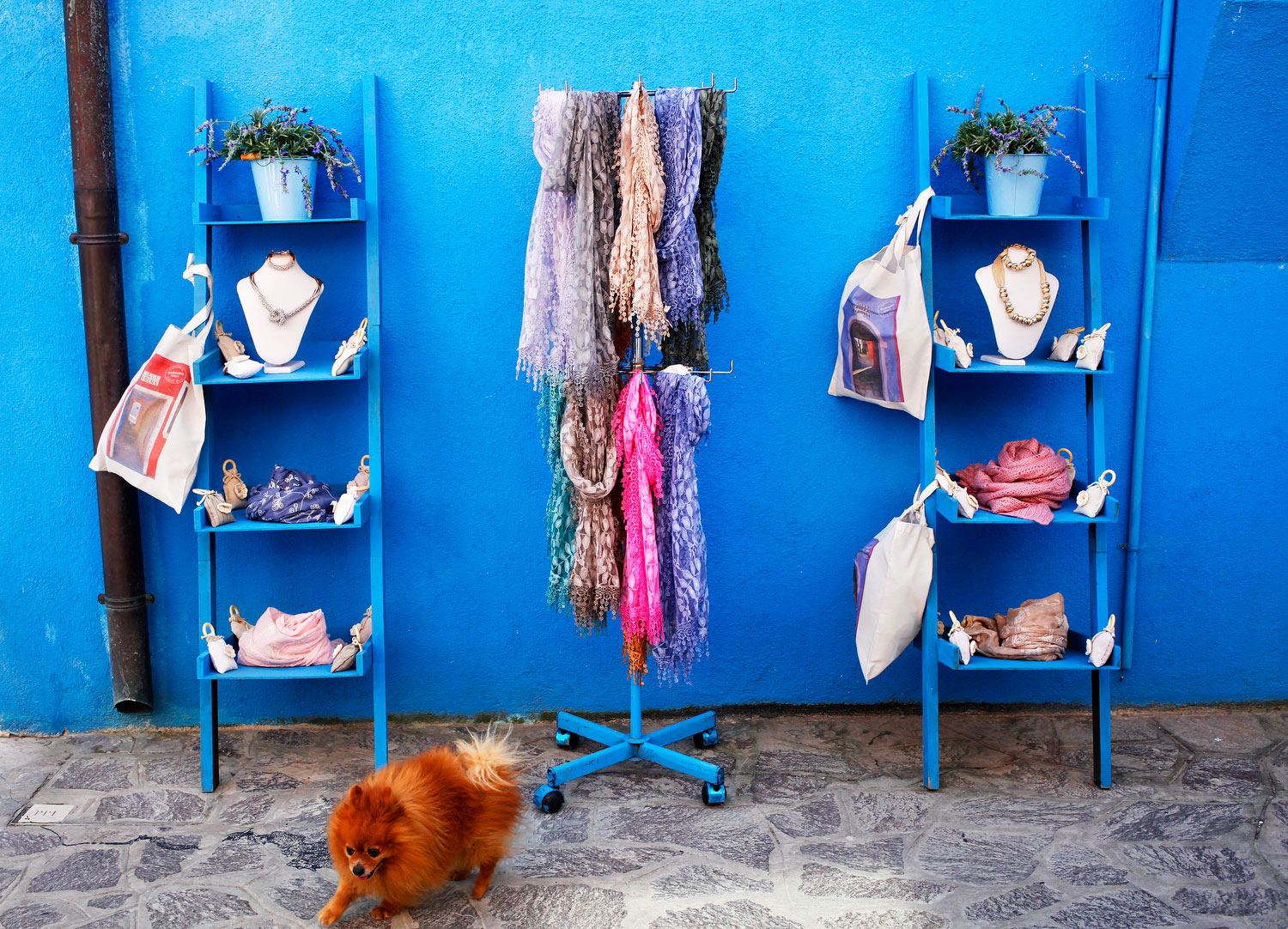 Blue wall and pomeranian dog in Burano, Italy | Freckle & Fair