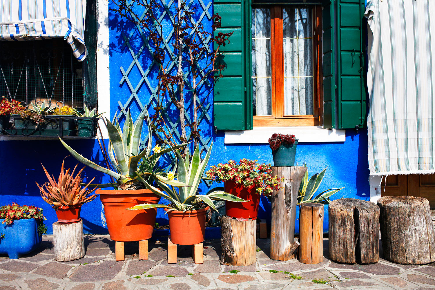 Houseplants in Burano, Italy | Freckle & Fair