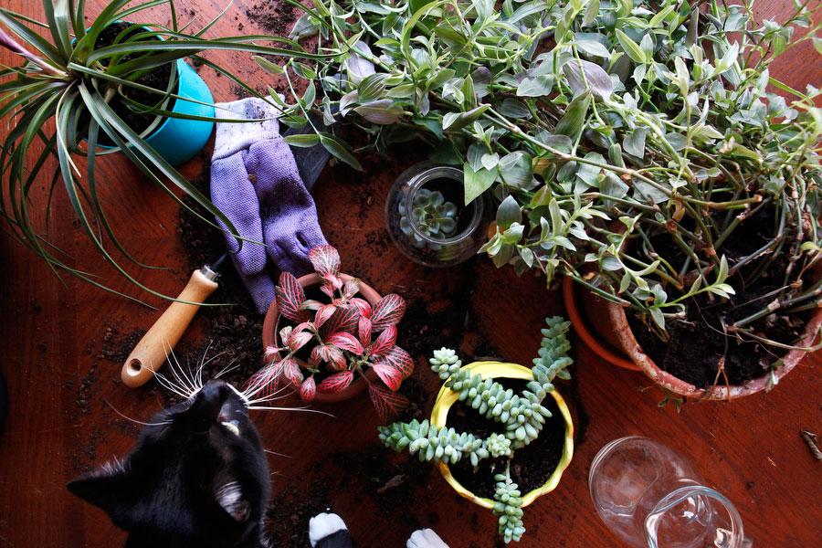 Pet-friendly indoor plants | Freckle & Fair
