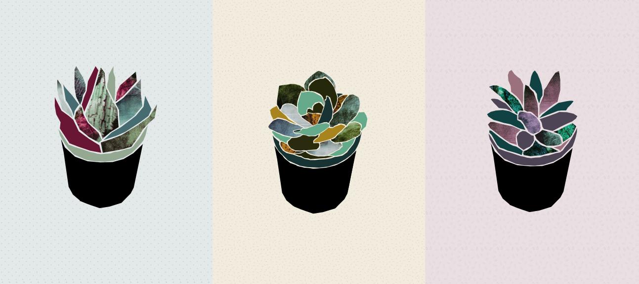 Succulents illustration | Freckle & Fair