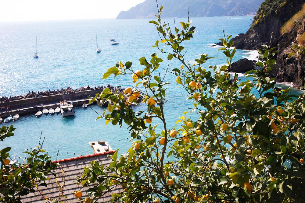 Lemon trees in Vernazza in Cinque Terre, Italy | freckleandfair.com