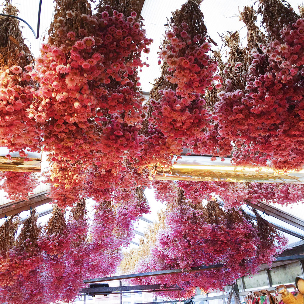 Bloemenmarkt, floating flower market in Amsterdam | freckleandfair.com