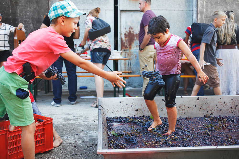 Salvan winery grape stomp