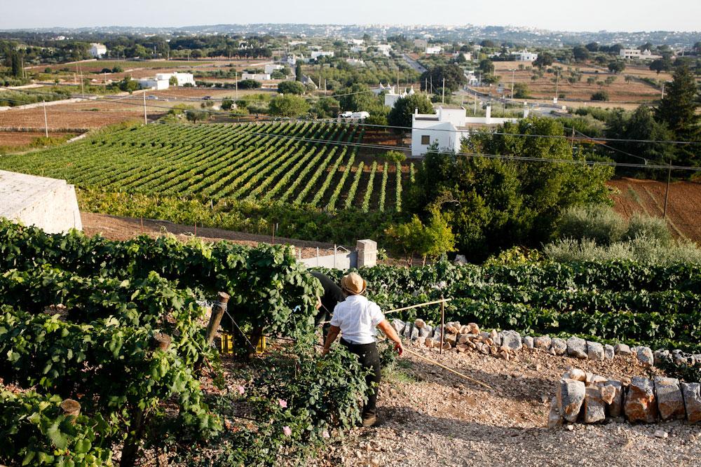 Sirose winery in Locorotondo in Puglia, Italy