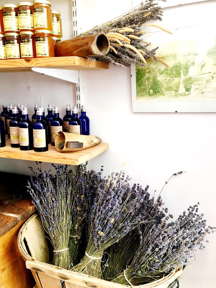 Sault, France: Lavender fields in Provence   freckleandfair.com