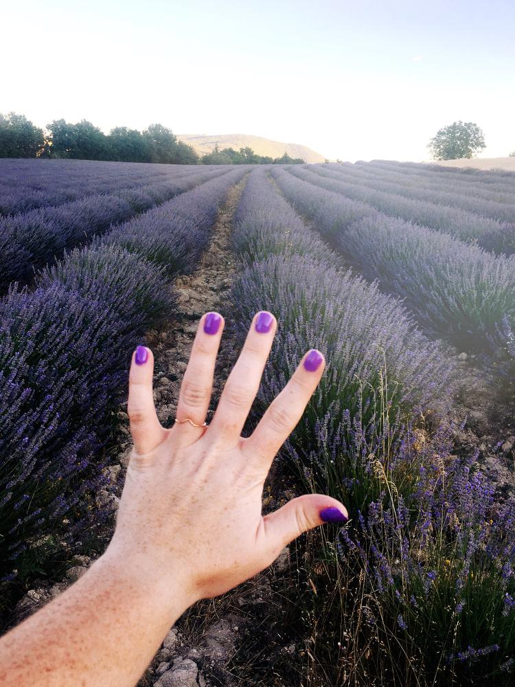 Lavender fields in Provence, France | freckleandfair.com
