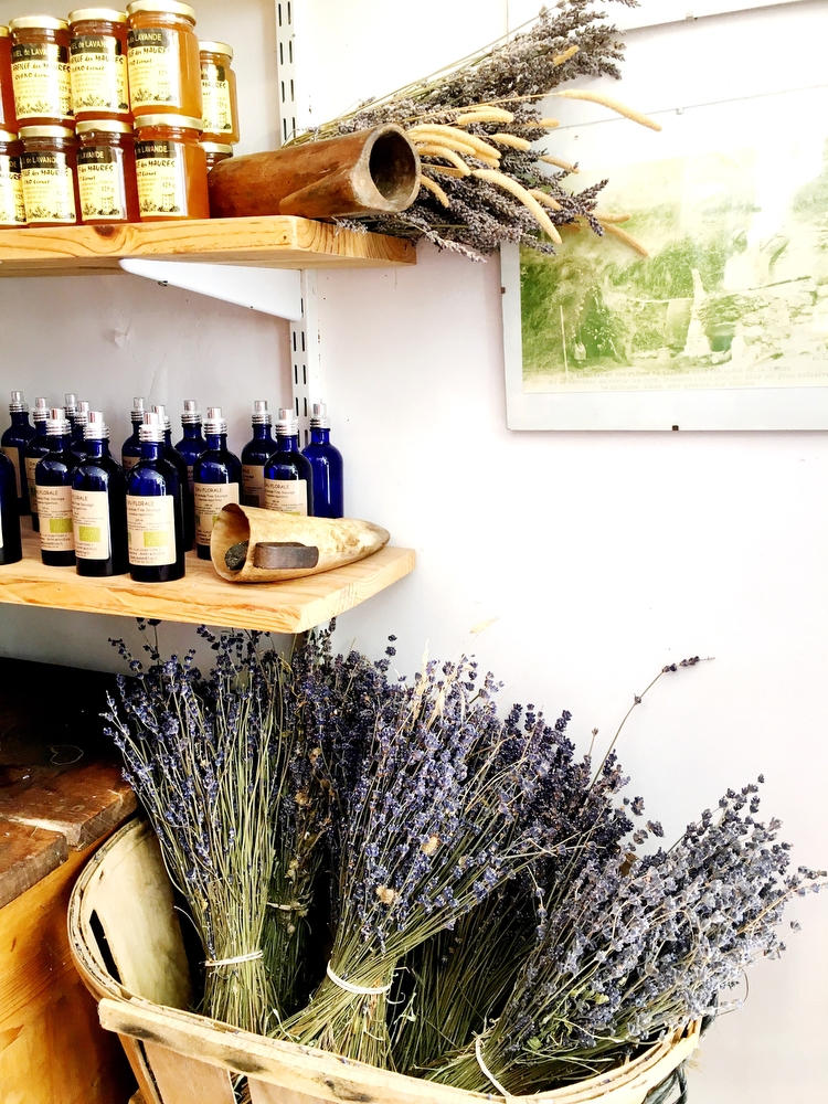 Sault, France: Lavender fields in Provence | freckleandfair.com