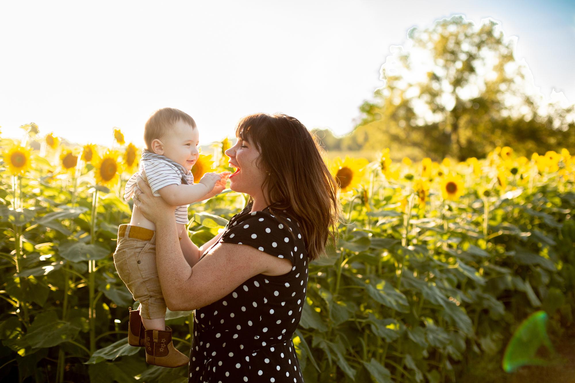 Sunflower fields at Schwinn Produce Farm