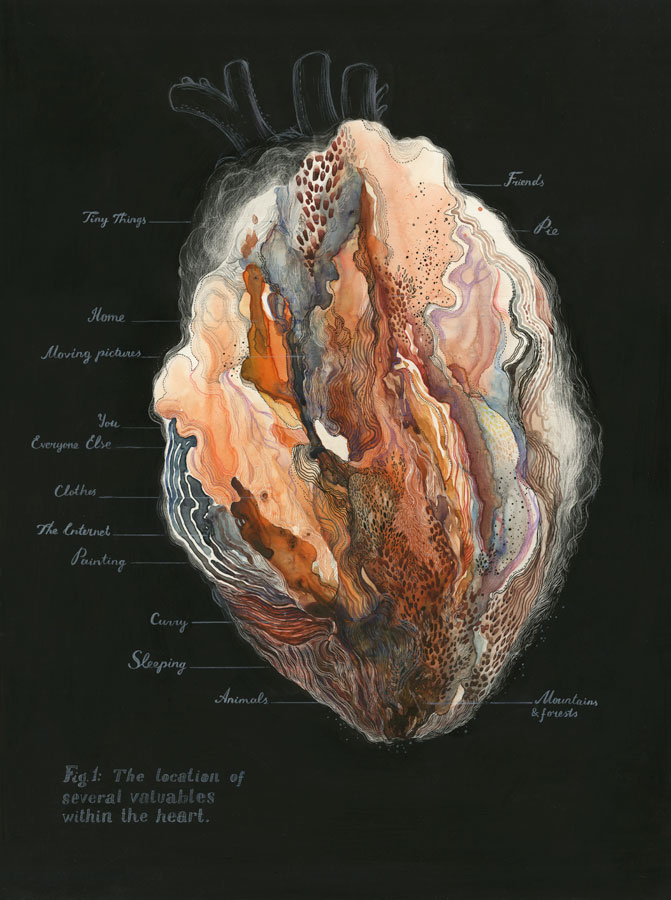 Figure 1: The Location Of Several Valuable Within The Heart