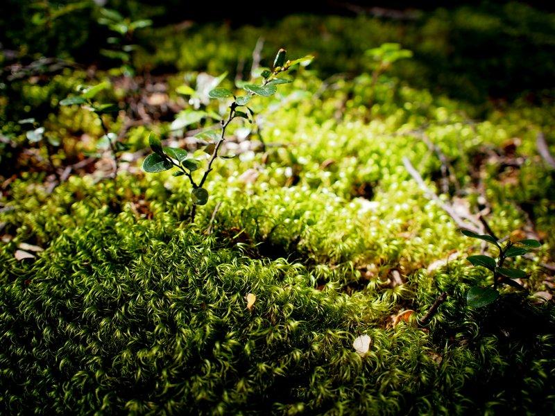 Green lichen everywhere