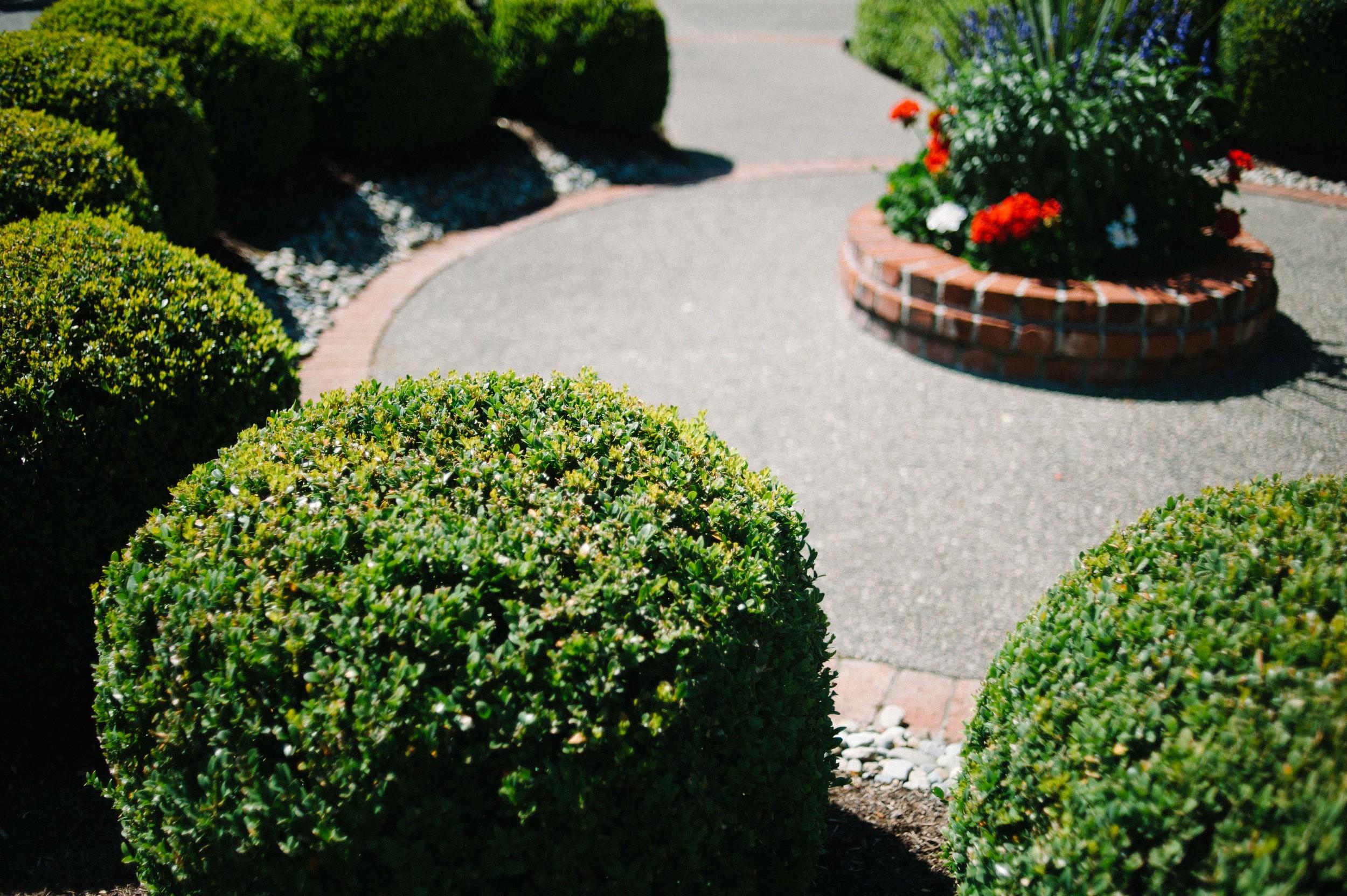 Green Thumb M-69.jpg