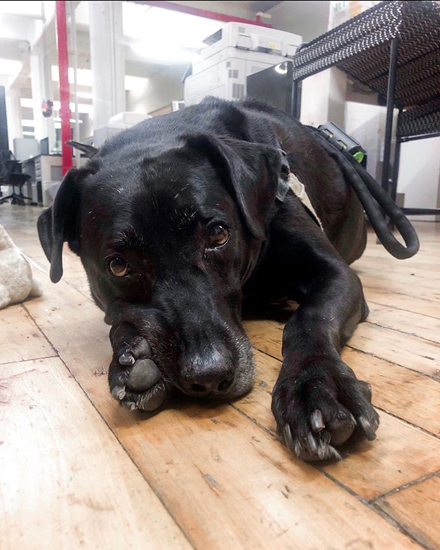 Did you know that forceMAJEURE is a dog friendly office? We have two resident office pups, Kodak and Betty! 🐾 #CreativeAgency #StudioLife #DogFriendly #PetFriendly #GraphicDesign