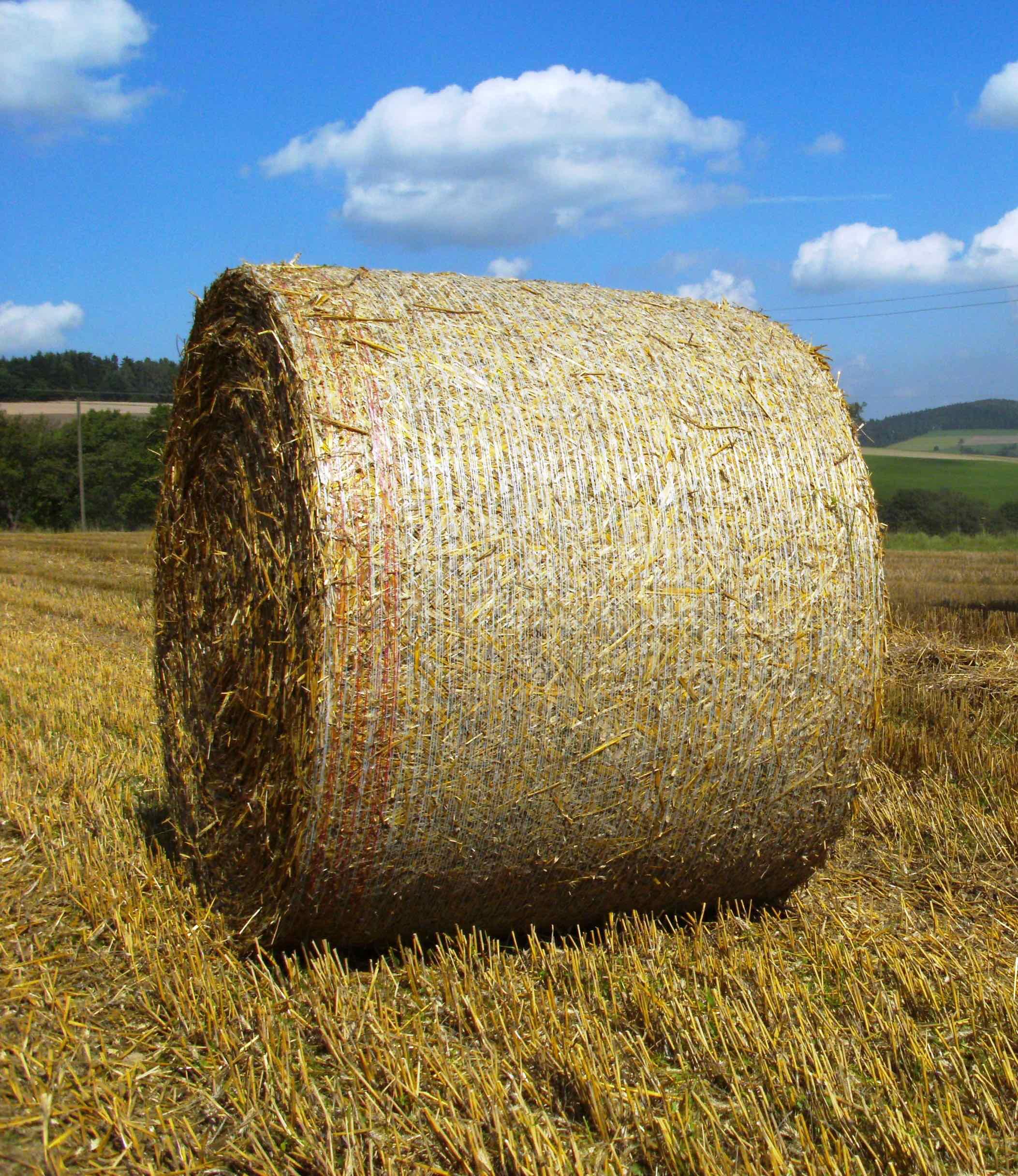 Rondotex straw.jpg