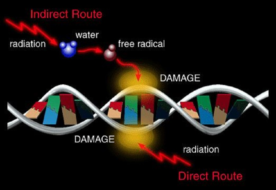 radiation_dna_damage.jpg