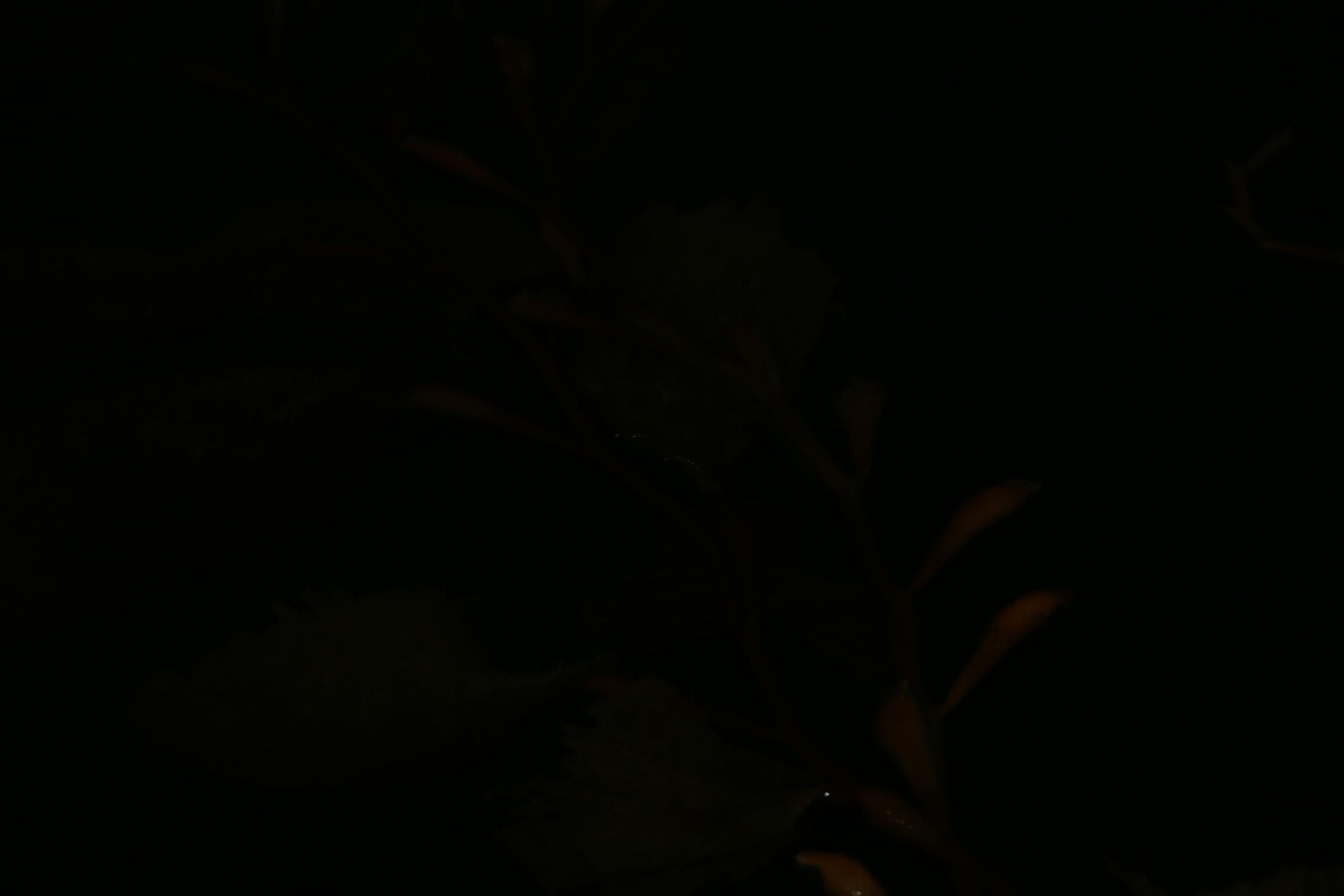 IMG_4794.JPG