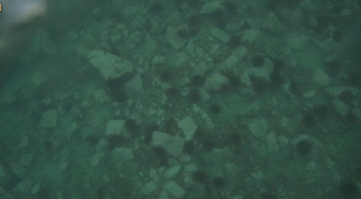 underwater langara island 2 (3).jpg