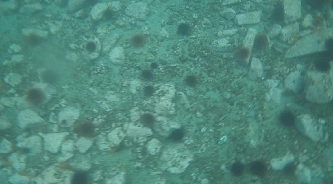 underwater langara island 2 (11).jpg