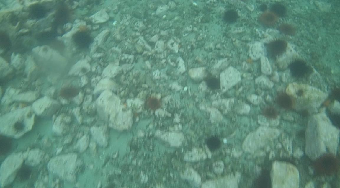 underwater langara island 2 (15).jpg