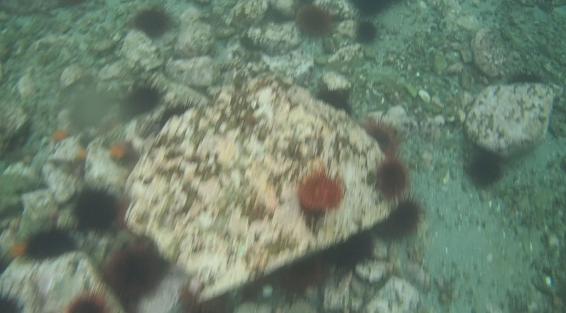 underwater langara island 2 (25).jpg