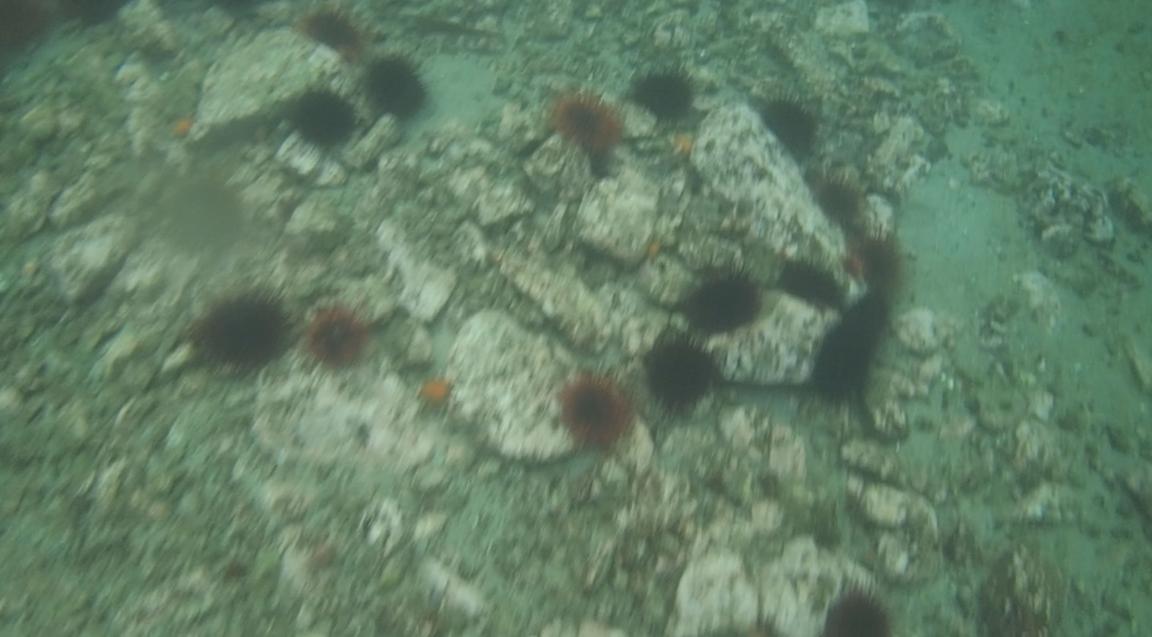 underwater langara island 2 (29).jpg