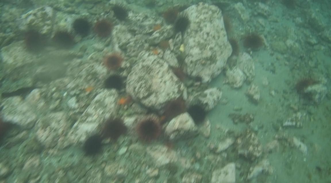 underwater langara island 2 (32).jpg