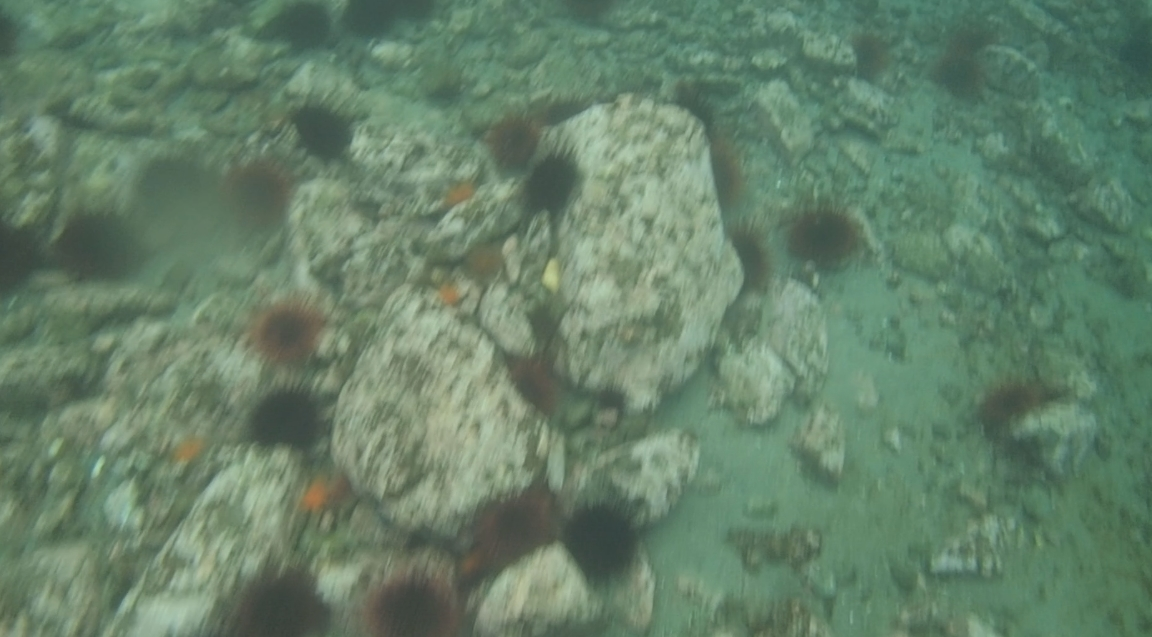 underwater langara island 2 (33).jpg