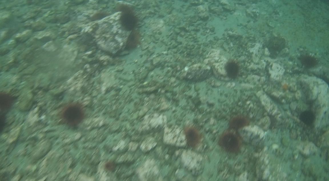 underwater langara island 2 (37).jpg