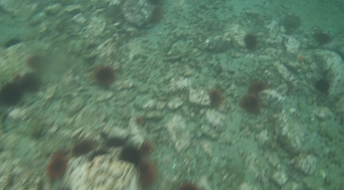 underwater langara island 2 (36).jpg