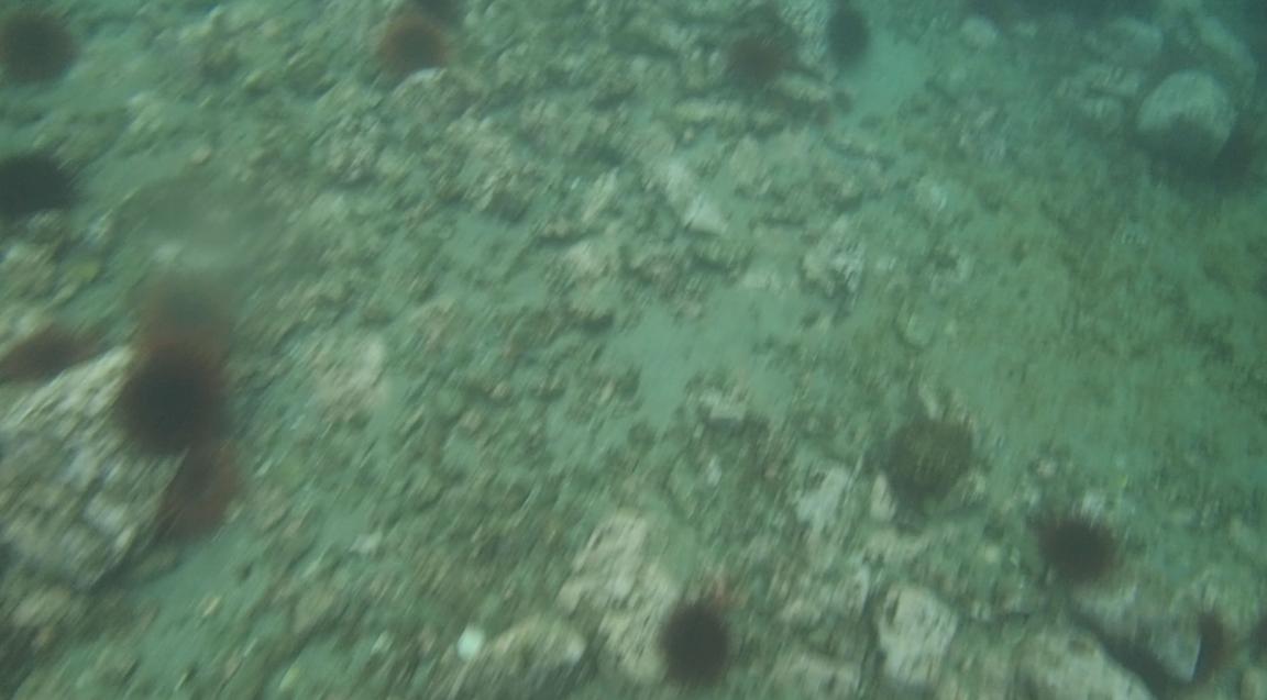 underwater langara island 2 (39).jpg