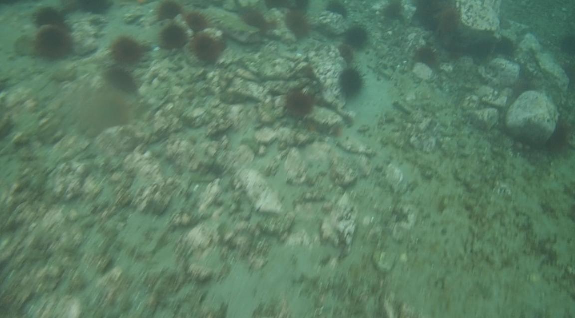 underwater langara island 2 (40).jpg
