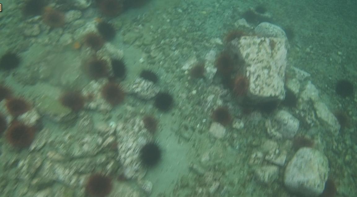 underwater langara island 2 (42).jpg