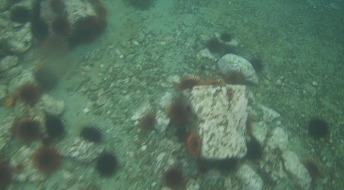 underwater langara island 2 (43).jpg