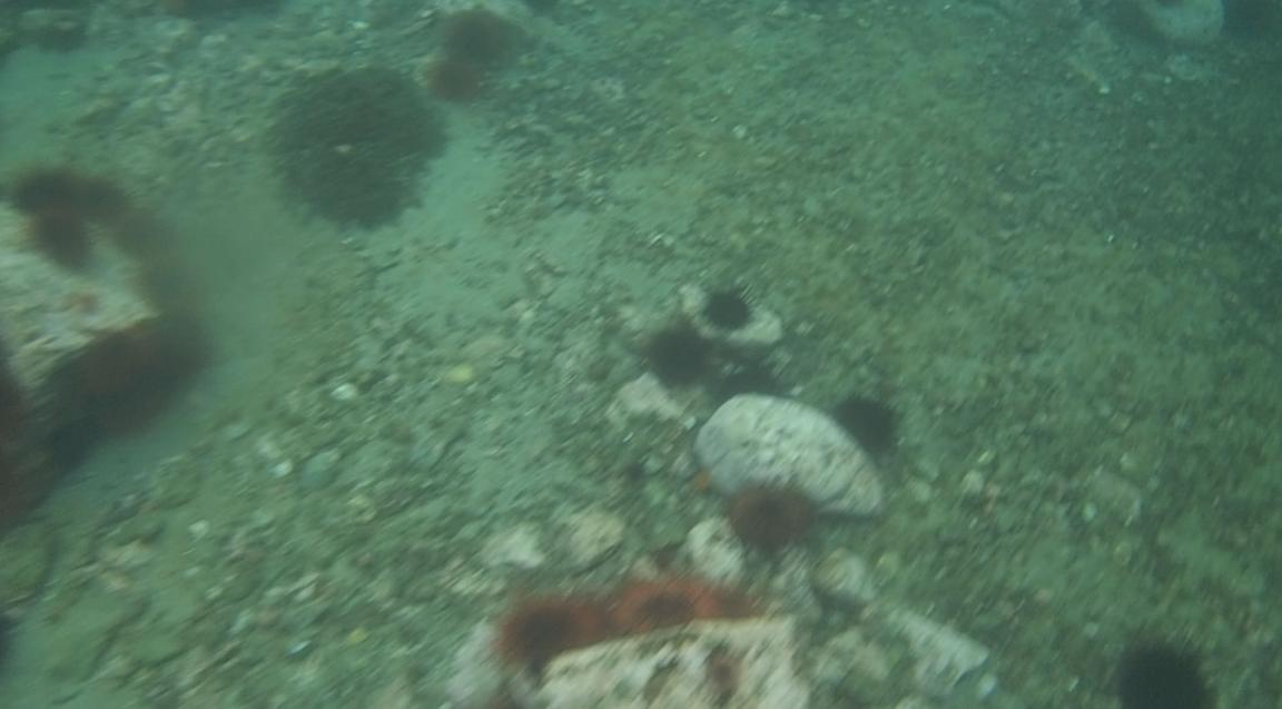 underwater langara island 2 (44).jpg