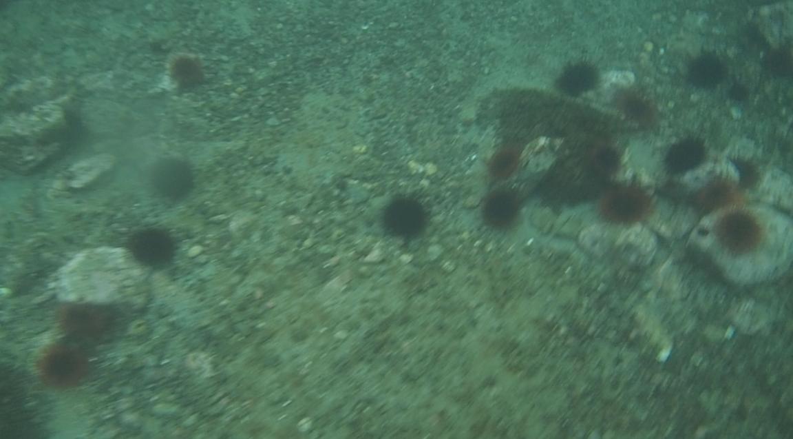 underwater langara island 2 (47).jpg