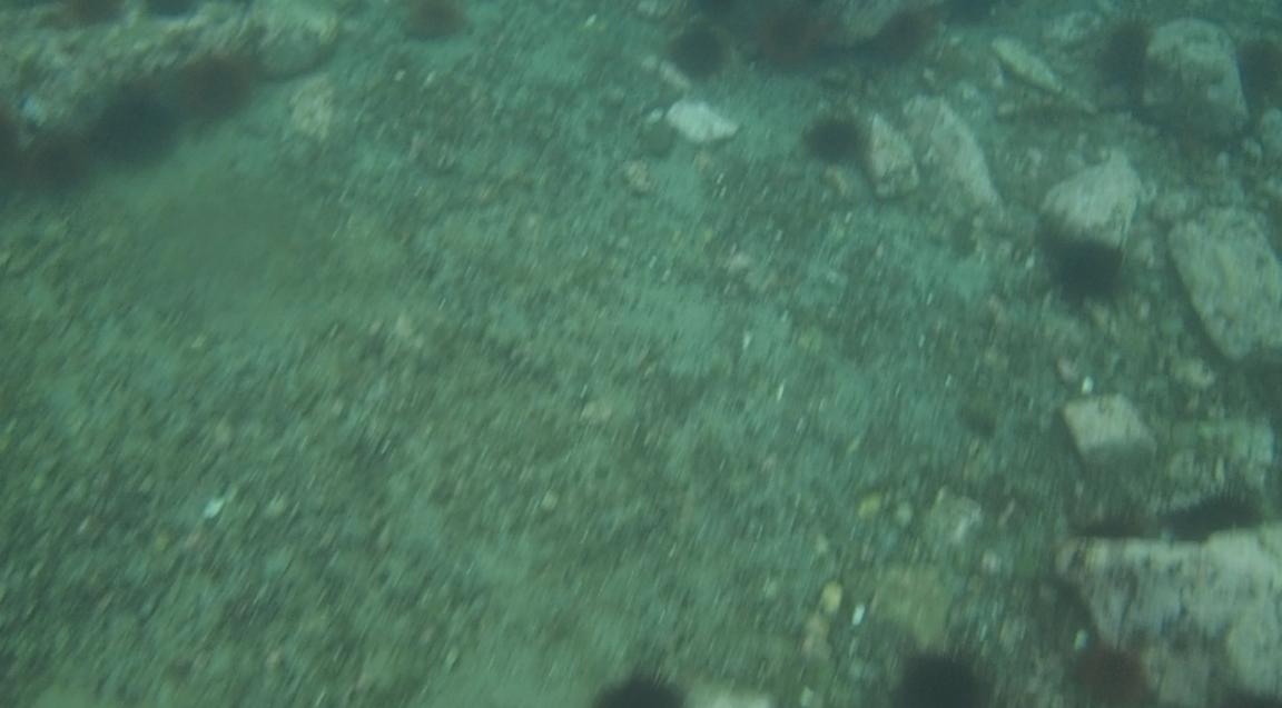 underwater langara island 2 (50).jpg