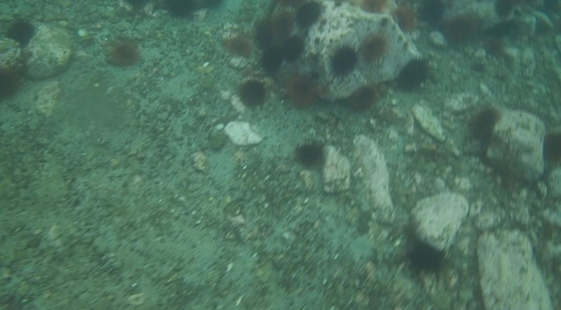 underwater langara island 2 (52).jpg