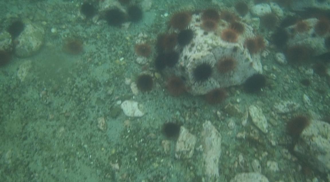 underwater langara island 2 (53).jpg