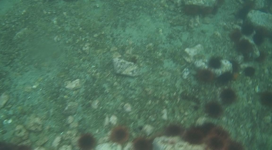 underwater langara island 2 (56).jpg